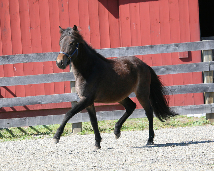 Gifta from Four Winds Farm <br> *Highest evaluated filly/mare*