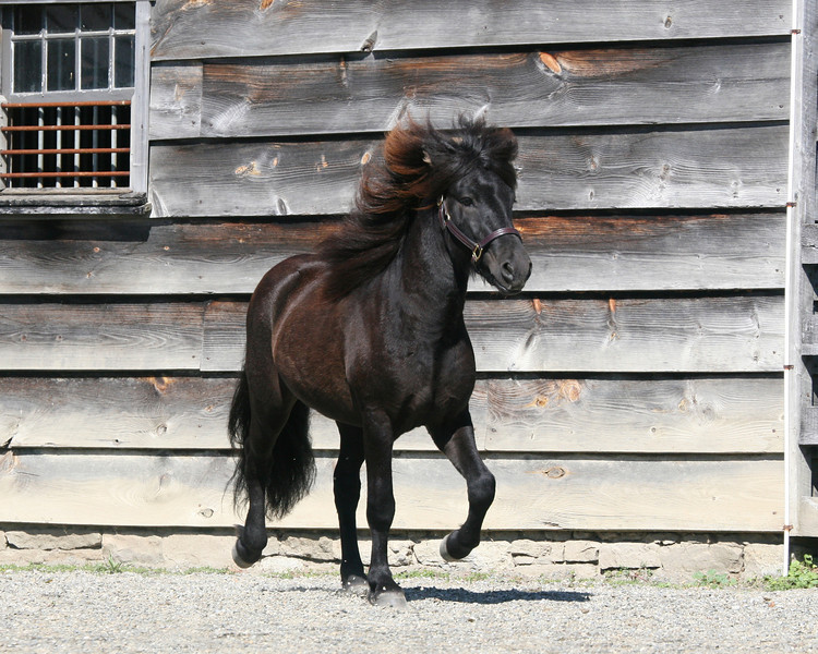 Loki from Bel Di <br> *Highest evaluated colt/stallion*