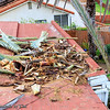 Tree Aftermath_20160201_010