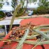 Tree Aftermath_20160201_008