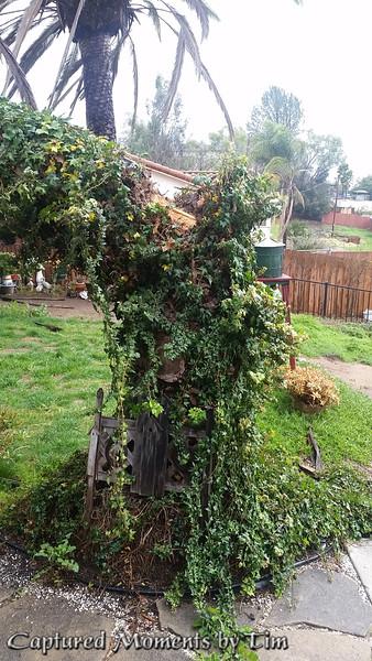 If a Tree Falls_20160131_002