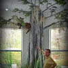 <b>Visitor Center Display - Bobcat in Cypress Tree with Spanish Moss - Steve Horowitz Shows It Off to a Visitor</b> <i>- Kay Larche</i>