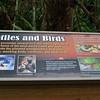 <b>Cypress Swamp Boardwalk Sign</b> <i>- Kay Larche</i>