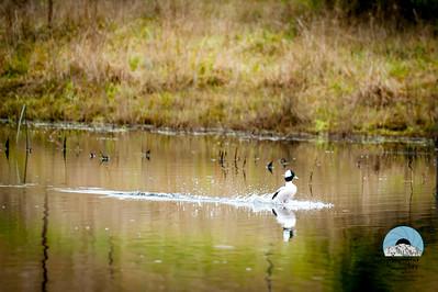 Bird Watching at Brightwater