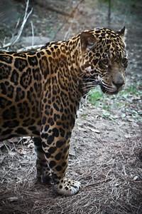 J103 Zoo PRINT EDITS 12 4 14-3