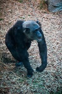 J103 Zoo PRINT EDITS 12 4 14-5