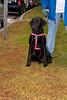 JDRF Walk Exeter-2009 043