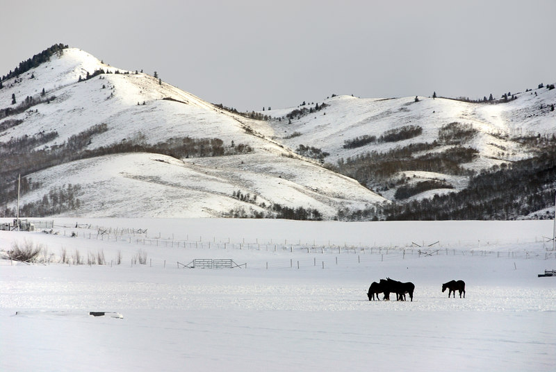 <b>Horses and mountains</b>   (Dec 14, 2006, 09:16am)  <p align=left>Taken from a moving bus on the way to Jackson Hole airport..</p>