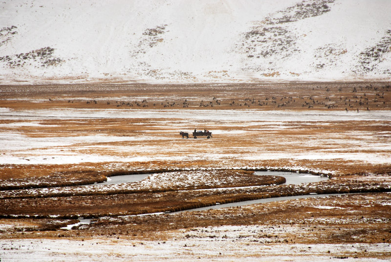 <b>Wagon at National Elk Refuge</b>   (Dec 13, 2006, 01:59pm)  <p align=left>This is a wagon taking a tour of the National Elk Refuge (not enough snow for the sleighs).</p>