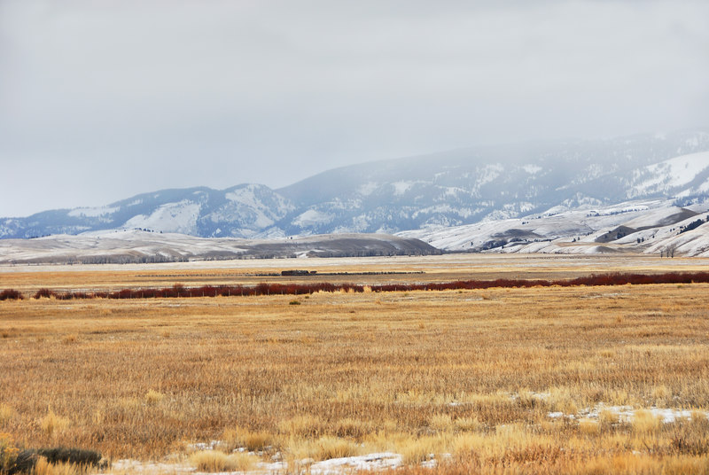 <b>National Elk Refuge</b>   (Dec 12, 2006, 02:23pm)