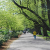 Boston Public Garden Promenade