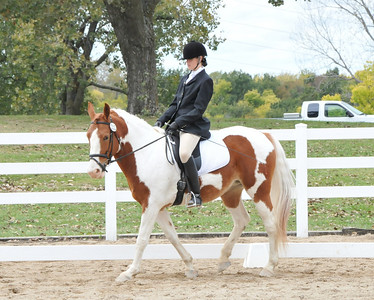Dressage Seat Equitation