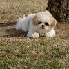 08 02-24 Doggie Olympics 08