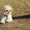 08 02-24 Doggie Olympics 05