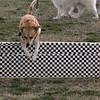 08 02-24 Doggie Olympics 18