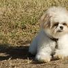 08 02-24 Doggie Olympics 06