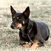 08 02-24 Doggie Olympics 15  edit