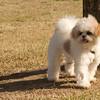08 02-24 Doggie Olympics 07