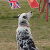 08 02-24 Doggie Olympics 16