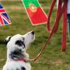 08 02-24 Doggie Olympics 16a