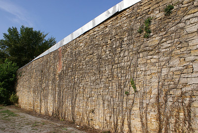 Vines on side of stone building