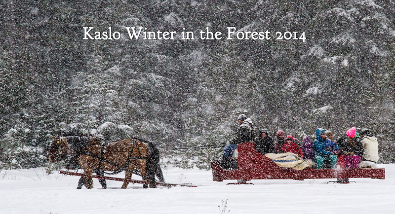 Kaslo Winter in the Forest 2014