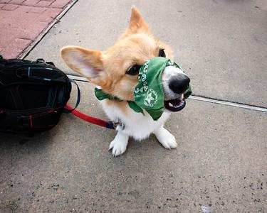 He can still bark though.