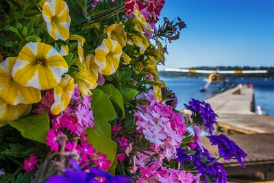 Kenmore Flowers