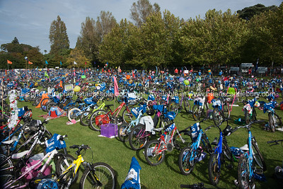 Weetbix Kids Tryathlon, 2012,Tauranga's  Memorial Park.Bicycles in the bike transition area. ALSO SEE; http://www.blurb.com/b/3811392-tauranga