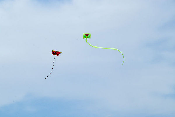 """<font size=""""3"""">These kites """"battle"""" for sport.  The pilots try to cut off a section of the opponent's tail.</font>"""