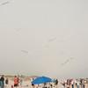 LR-Kites11-09560
