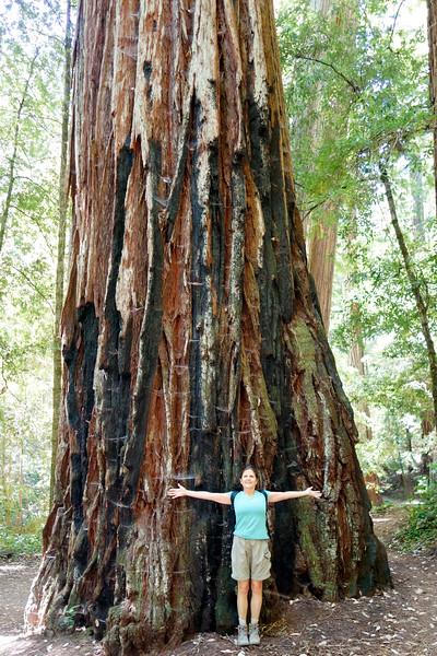 Massive trees galore!