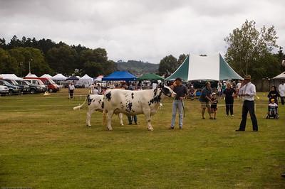 Belgian Blue heifer Agricultural and Pastoral Show Kumeu New Zealand - 11 Mar 2007