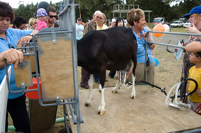 Nanny goat being milked Agricultural and Pastoral Show Kumeu New Zealand - 11 Mar 2007