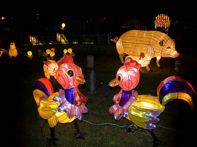 Pigs and chickens Lantern Festival Albert Park Auckland New Zealand - 2 Mar 2007