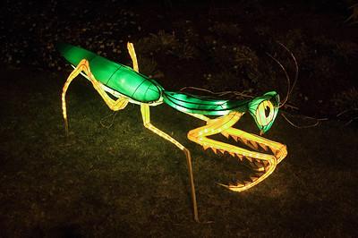Praying mantis Lantern Festival Albert Park Auckland New Zealand - 2 Mar 2007