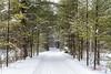 Larose Forest - Forêt Larose