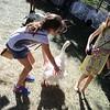 Last Fling 2016 - Naperville, Illinois - Family Fun Land - Petting Zoo