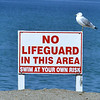 0920 seagull lifeguard