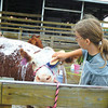Debbie Wachter/NEWS<br /> Megan Park of Slippery Rock Township gets her   cow ready for the junior beef show at the Lawrence County Fair.