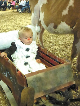 Debbie Wachter/NEWS<br /> Caleb Ballard, 1, of West Middlesex rides along side the family's Guernsey calf, Tamarolo, during the calf dress-up contest. His brother and sister were part of the team.
