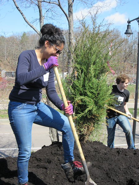 """Statewide Volunteer Day looks like """"Arbor Day"""" at several sites."""
