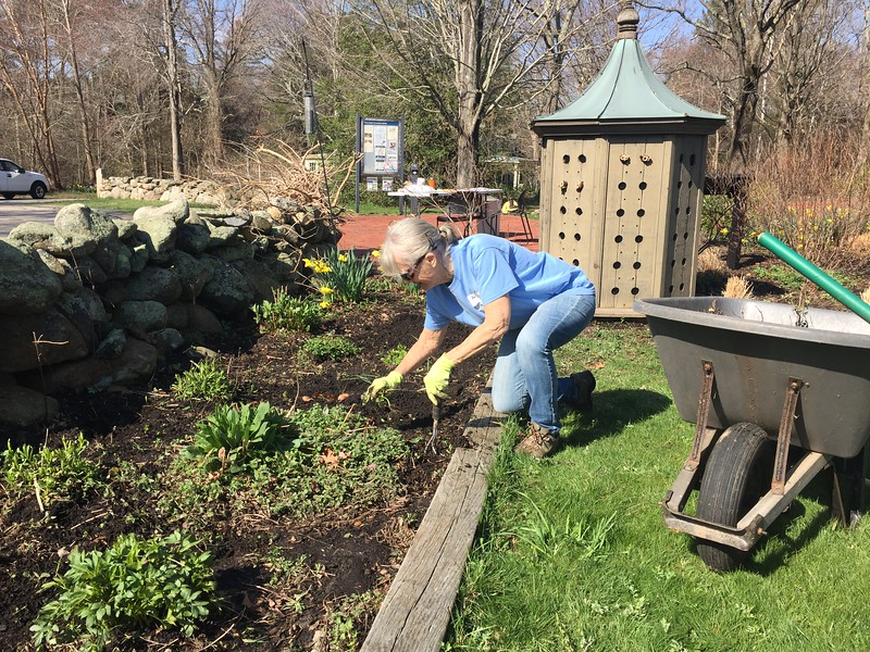 Spring gardens need TLC -- and weeding.