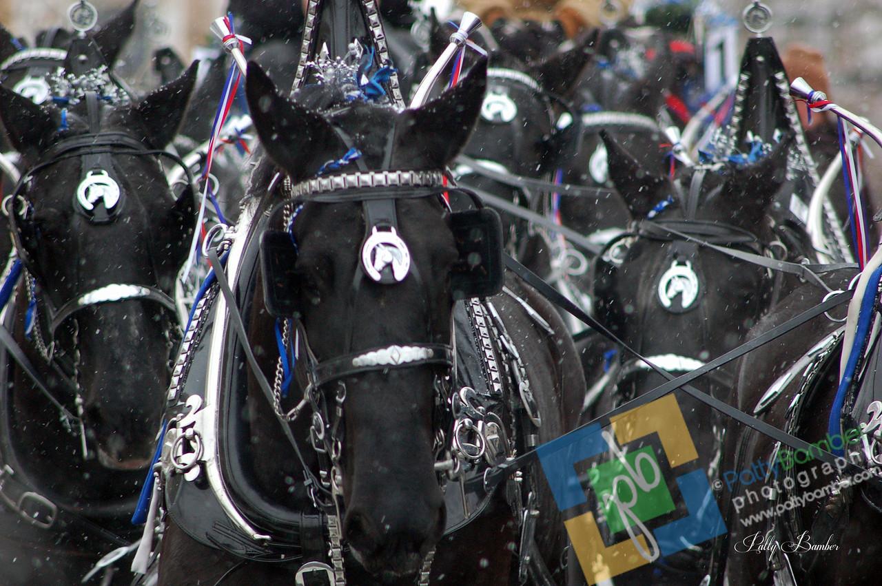 12-08 Lebanon Christmas Parade0036 Black Horses