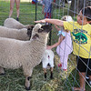 Third Thursday activities at Fay Park in Littleton. Camden Cotter, 6, of Ayer, reaches out to pet a sheep from Springdell Farm. (SUN/Julia Malakie)