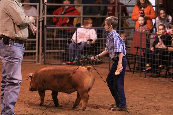 Swine 1