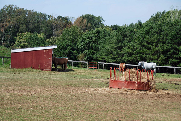 Horses at the Carroll County Farm Museum.