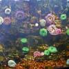 Cold water invertebrates