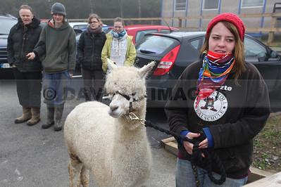 Alpacas on Tour 2014
