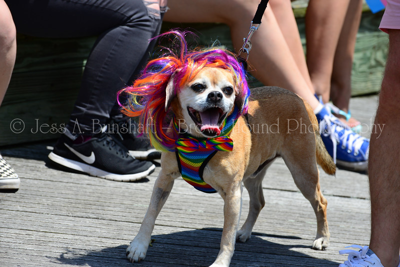 20190622_0033_Pet Pride Parade-a